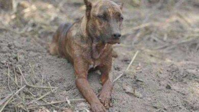 Foto de Família do cachorro Vitinho é encontrada após ele fazer vigília em Brumadinho