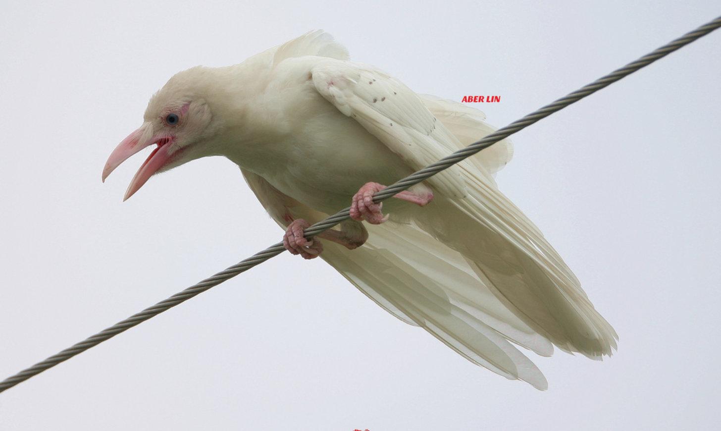 22 animais albinos que vão impressionar você para sempre