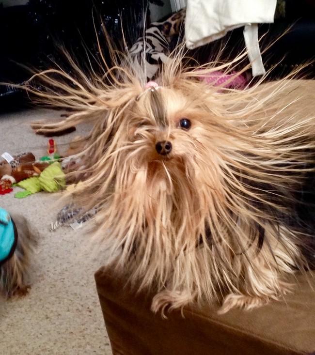 1550602204 404 25 animais que estao tendo um dia de cabelo ruim 24 animais que estão tendo um dia de cabelo ruim