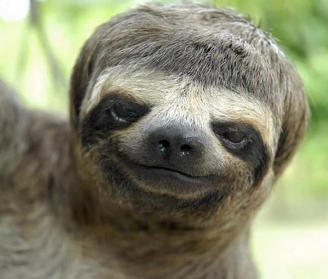24 animais que estão tendo um dia de cabelo ruim