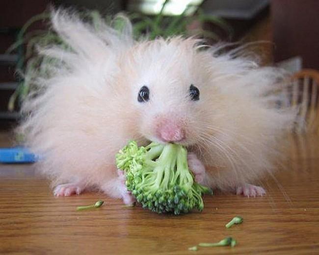 1550602205 240 25 animais que estao tendo um dia de cabelo ruim 24 animais que estão tendo um dia de cabelo ruim
