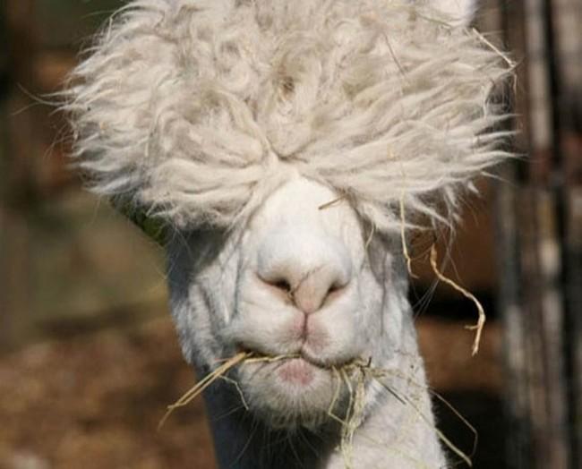 1550602205 367 25 animais que estao tendo um dia de cabelo ruim 24 animais que estão tendo um dia de cabelo ruim