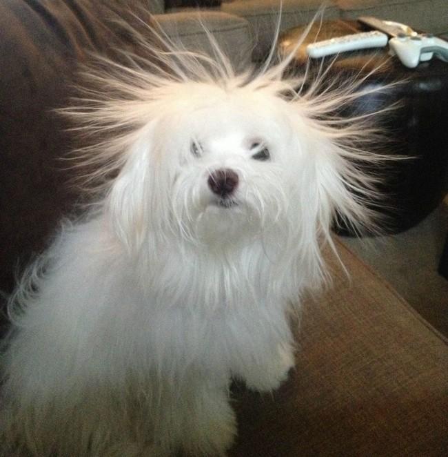 1550602205 425 25 animais que estao tendo um dia de cabelo ruim 24 animais que estão tendo um dia de cabelo ruim