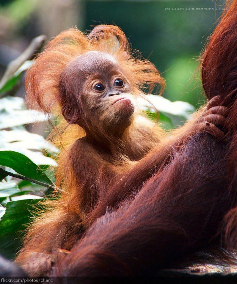 1550602206 513 25 animais que estao tendo um dia de cabelo ruim 24 animais que estão tendo um dia de cabelo ruim
