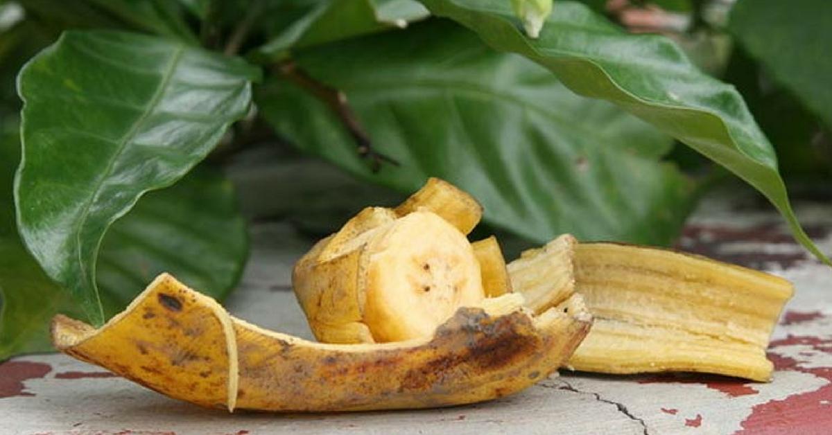 1551391451 514 Cascas de banana 9 utilidades que voce nao conhecia Casca de banana: 9 utilidades que você não conhecia