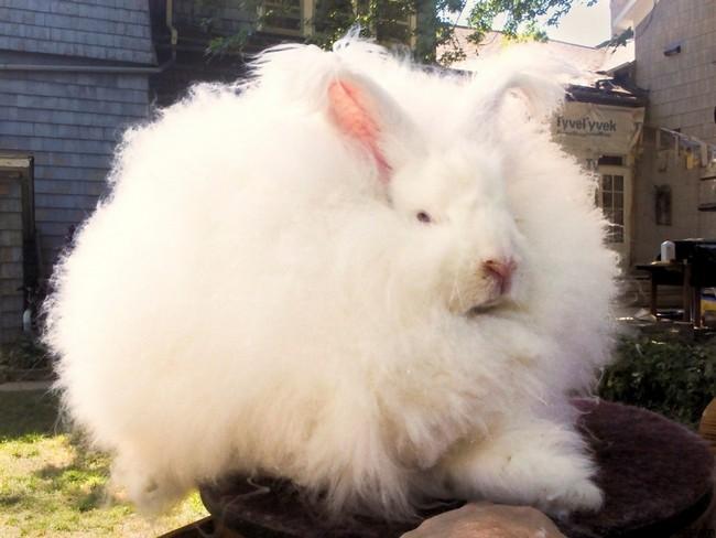 25 animais que estao tendo um dia de cabelo ruim 24 animais que estão tendo um dia de cabelo ruim