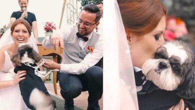 Photo of Cão rouba a cena em casamento e emociona convidados