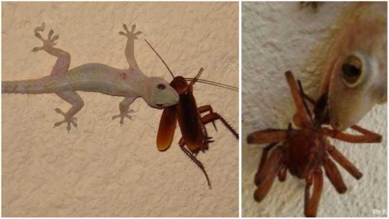As lagartixas são grandes aliadas na hora de cuidar da sua casa, preserve-as!
