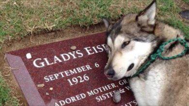 Foto de Cachorro chora ao ver túmulo do dono (vídeo)