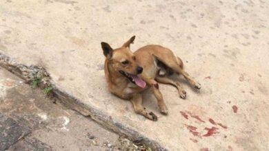 Homem arremessa cão de janela de prédio no DF e causa revolta