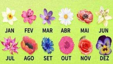 Foto de Descubra o que a flor do nascimento diz sobre a sua personalidade