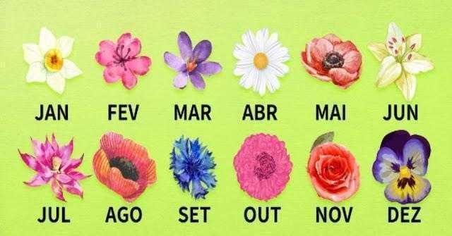 Descubra o que a flor do nascimento diz sobre a sua personalidade de