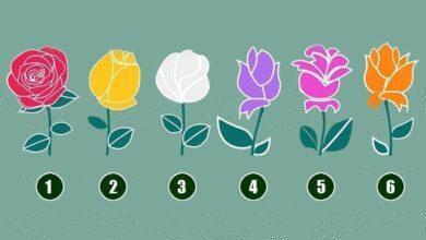 Foto de Escolha uma Rosa e depois leia a promessa de Deus em sua vida