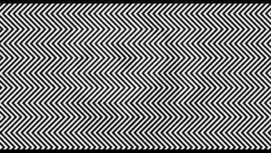Estudos mostram que só 1% das pessoas conseguem encontrar o animal nesta imagem.