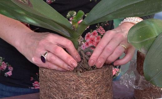Como-plantar-orquídeas-em-xaxim
