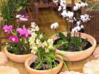 Como-plantar-orquídeas-na-terra