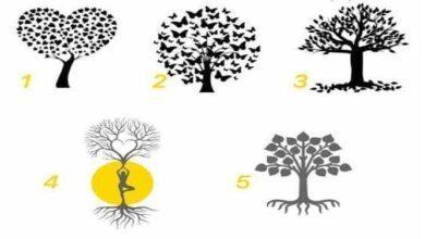 Escolha uma árvore e descubra o que ela diz sobre você