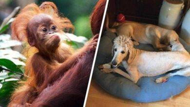 Foto de 24 animais que estão tendo um dia de cabelo ruim