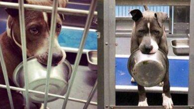 Cão só aceitou ser adotado após permitirem que sua tigela de comida fosse junto