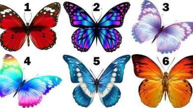 Escolha uma borboleta e veja sua mensagem de felicidade