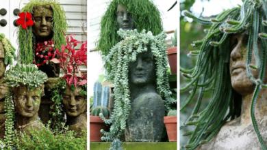 Foto de 13 Ideias lindíssimas de cabeças verdes com suculentas