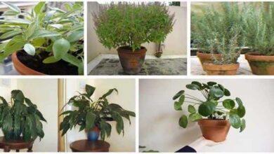 12 plantas que trazem boas energias para casa