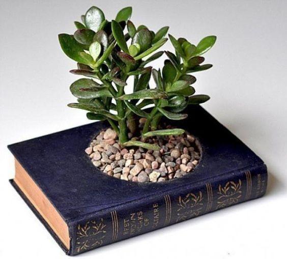 decoracao suculentas livro
