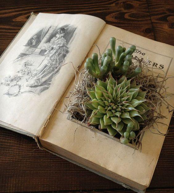 decoracao suculentas livro inspiracao