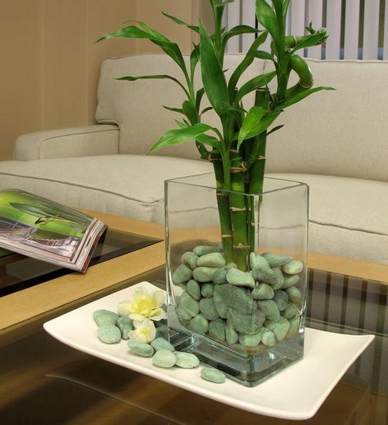 melhores plantas casa bambu