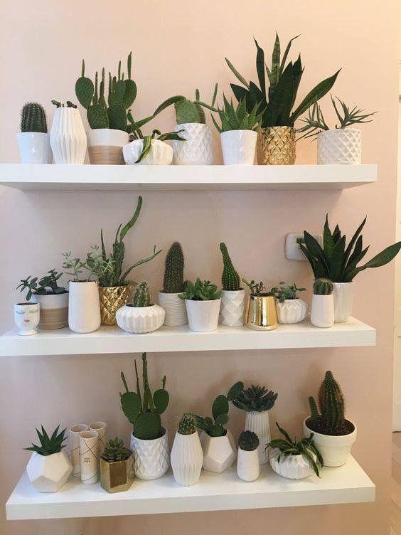 melhores plantas casa cato prateleira