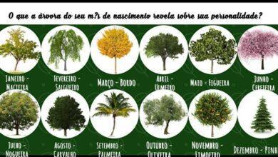 Photo of Em qual mês você nasceu? Veja o que a árvore do seu mês revela sobre sua personalidade
