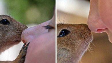 Foto de Esquilo visita todos os dias o homem que salvou sua vida