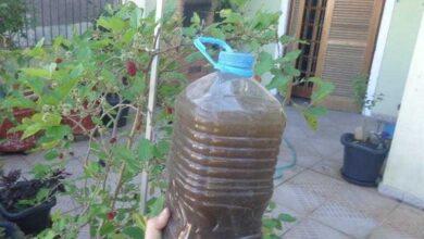 Foto de Adubo natural que faz sua planta florir em 15 dias