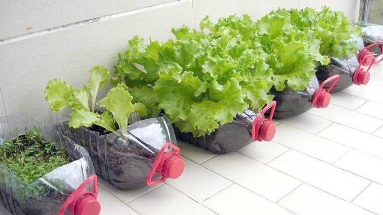 Dicas para fazer uma horta em casa 6g