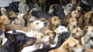 Família é presa suspeita de matar cachorros e usar a carne para fazer linguiça e vender nas feiras