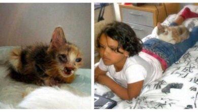 Menina salva gato desfigurado que ninguém mais queria