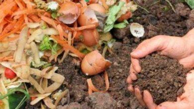 Foto de Como fazer adubo caseiro com casca de legumes