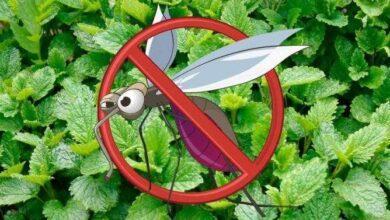 10 plantas para afastar insetos de casa