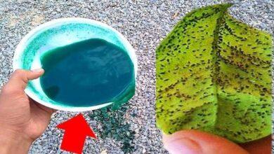 Líquido a Base de Detergente para Destruir Pragas nas Plantas