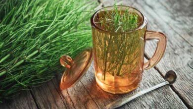 Foto de Chá de cavalinha: Emagrece, limpa o corpo, elimina celulite e mais!