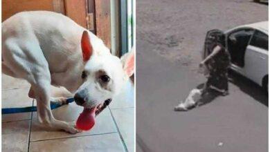 Foto de Mulher abandona cão com deficiência no meio da rua; vídeo é de cortar o coração