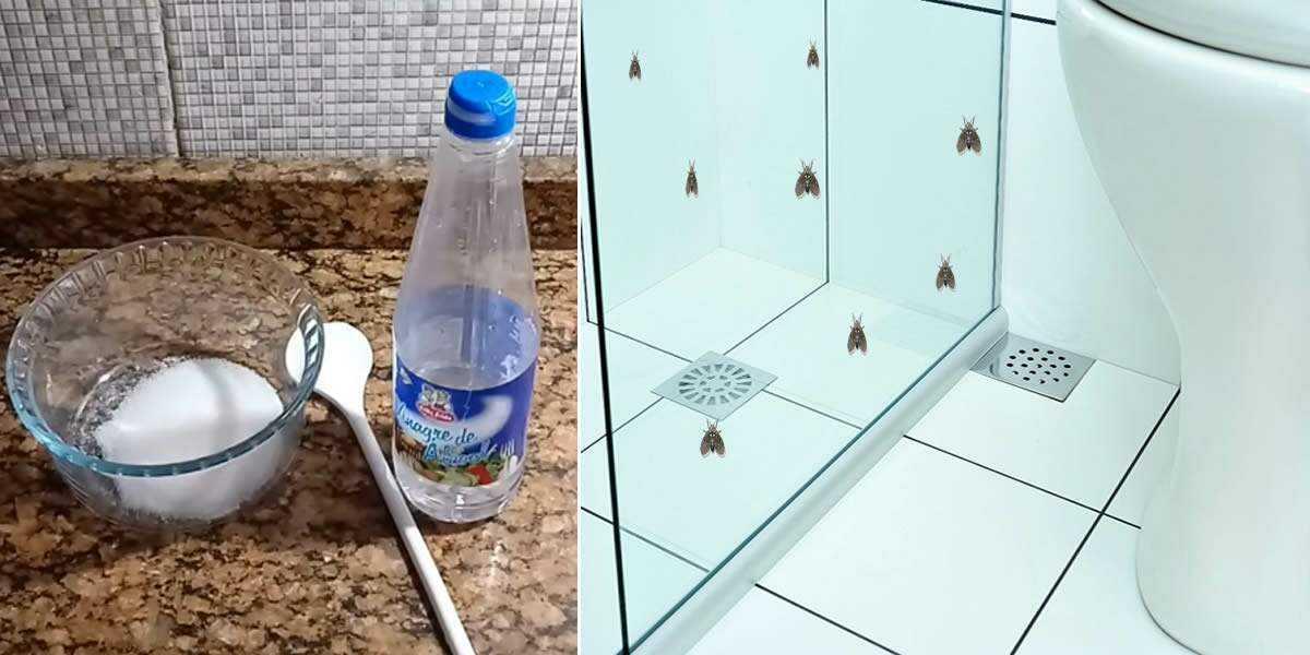 Como evitar os mosquitos que aparecem no banheiro