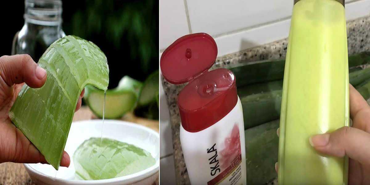Shampoo de babosa: fortalece os fios e proporciona brilho e maciez aos cabelos