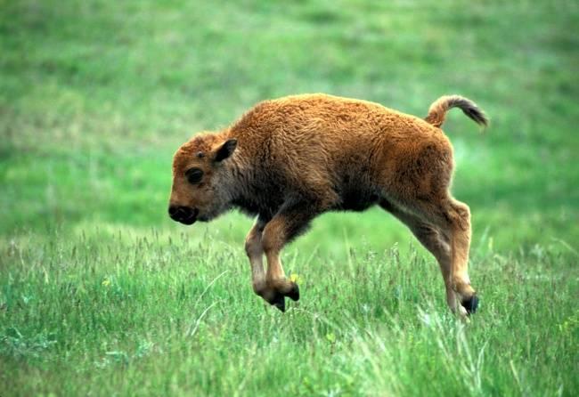 animais-recem-nascidos-4