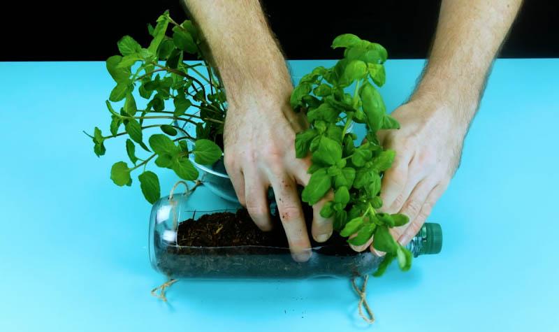 1584731031 512 4 Ideias geniais e ecologicas para reutilizar garrafas plasticas com 4 Ideias geniais e ecológicas para reutilizar garrafas plásticas com plantas e ervas aromáticas