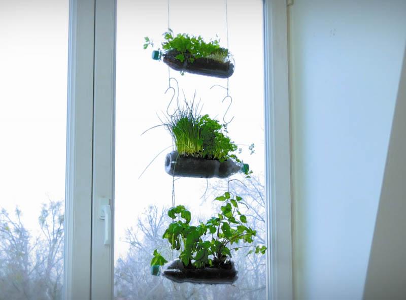1584731032 425 4 Ideias geniais e ecologicas para reutilizar garrafas plasticas com 4 Ideias geniais e ecológicas para reutilizar garrafas plásticas com plantas e ervas aromáticas