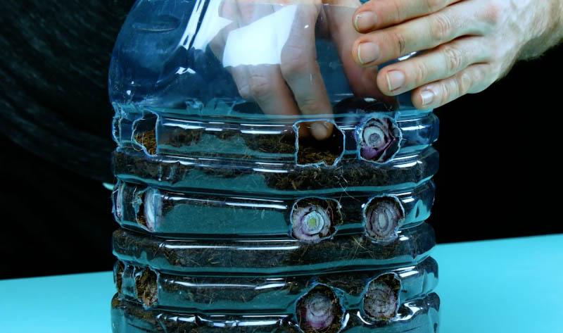 1584731036 441 4 Ideias geniais e ecologicas para reutilizar garrafas plasticas com 4 Ideias geniais e ecológicas para reutilizar garrafas plásticas com plantas e ervas aromáticas