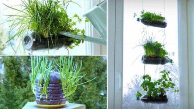 Foto de 4 Ideias geniais e ecológicas para reutilizar garrafas plásticas com plantas e ervas aromáticas