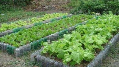 Foto de Dicas para fazer horta em casa