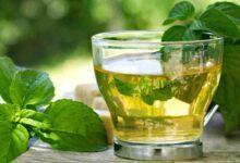 Foto de 10 benefícios do chá de jurubeba para a sua saúde